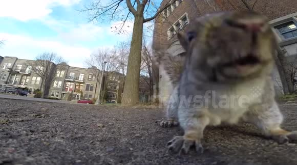 Everyone is going nuts for squirrel videos